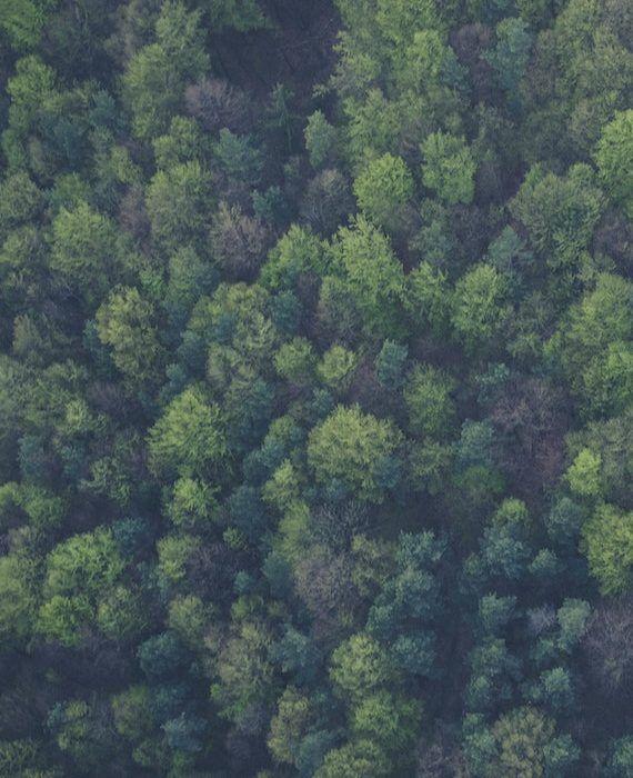 bird-s-eye-view-forest-green-113338 (1)