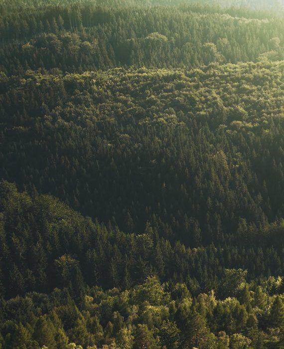 conifer-dark-green-daylight-572937